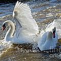 Stop Splashing Me by Susie Peek