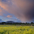 Storm At Sunset by Guido Montanes Castillo