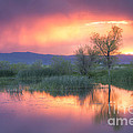 Storm Color by Idaho Scenic Images Linda Lantzy