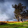 Storm Onto A Vineyard by Boon Mee