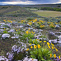 Storm Over Wildflowers by Mike  Dawson