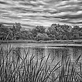 Storm Passing The Pond In Bw by Thomas Woolworth