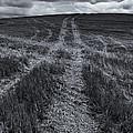 Storm Tracks by Mike  Dawson