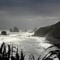 Stormy Coast New Zealand by Amanda Stadther