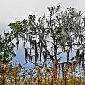 Stormy Marsh Cedar Tree by Ginger Wakem