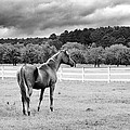 Stormy Pasture by Scott Hansen