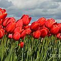 Stormy Reds by Jan Noblitt