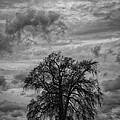 Stormy Tree by Gavin Baker