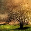 Stormy Weather by Georgiana Romanovna