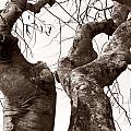 Story Tree by Jennifer Apffel
