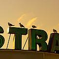 Strand by Tom Gari Gallery-Three-Photography