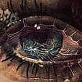 Strange Eye by Melissa  Rowell