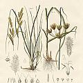 Strange Grasses by Splendid Art Prints