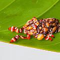 Strange Moth by Craig Lapsley