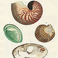 Strange Snails And Clams by Splendid Art Prints