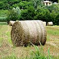 Straw To Collect by Salvatore Gabrielli