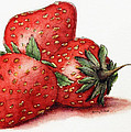 Strawberries by Dana Alfonso