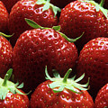 Strawberries (fragaria 'elsanta') by Andrew Ackerley/science Photo Library