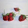 Strawberries  by Zaira Dzhaubaeva