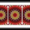 Strawberry Explosion Triptych - Kaleidoscope by Barbara Griffin