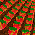 Strawberry Fields Forever by Andee Design