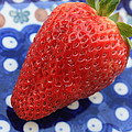 Strawberry On Blue Plate by Carol Groenen
