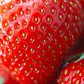 Strawberry by Terri Waters
