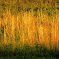 Straw Landscape by David Lee Thompson