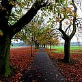 Stray Beauty In Autumn No 2 by Dwight Pinkley