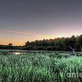 Streaky Swamp Sunrise by Deborah Smolinske