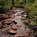 Stream Along Gros Morne Trail In Gros Morne Np-nl by Ruth Hager