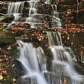Stream And Leaves by Frank Burhenn