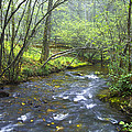 Stream Below Amicalola Falls by Debra and Dave Vanderlaan