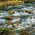 Stream Fall Colors Great Smoky Mountains Painted  by Rich Franco