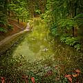 Stream In Paradise by Eduardo Tavares