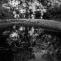 Stream by Monte Landis
