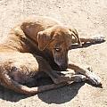 Street Dog by Roberto F