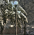 Street Lamp In The Snow by Benanne Stiens