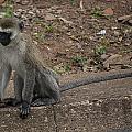 Street Monkey by Paul Weaver