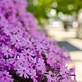 Street Wildflower by Andrea Anderegg