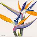 Strelitzia Flowers by Dai Wynn