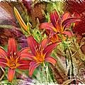 Striking Daylilies - Digital Art by Carol Groenen