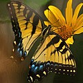 Striped Beauty by Dennis Baswell