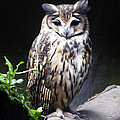 Striped Owl by Kurt Van Wagner