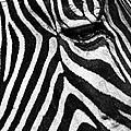 Stripes by Claudio Bacinello
