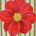 Stripes-dahlia II by Carol Sabo