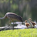 Stroll By The Pond by Carol Groenen