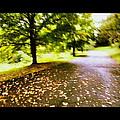 Stroll On An Autumn Lane by Angela Rath