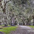 Plantation Drive by Dale Powell
