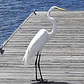 Strolling On The Dock by Cynthia N Couch
